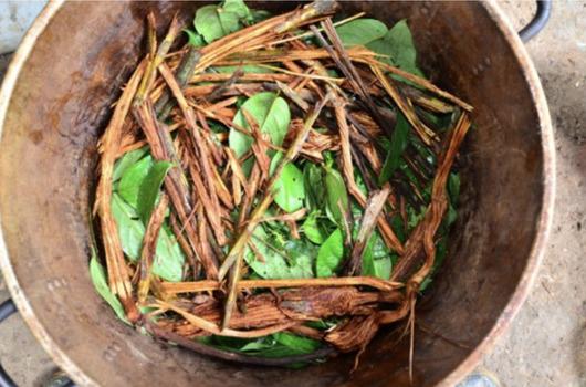 bereiding van ayahuasca