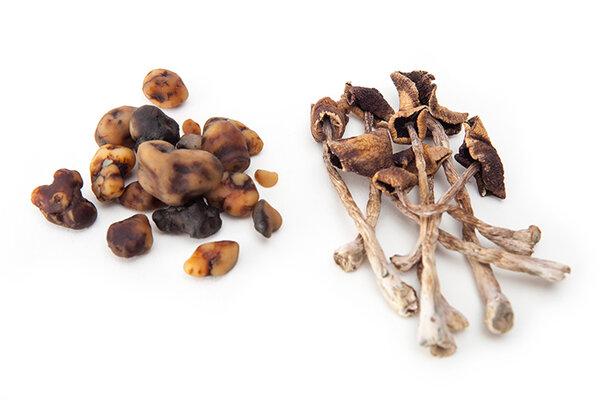 truffels en paddos