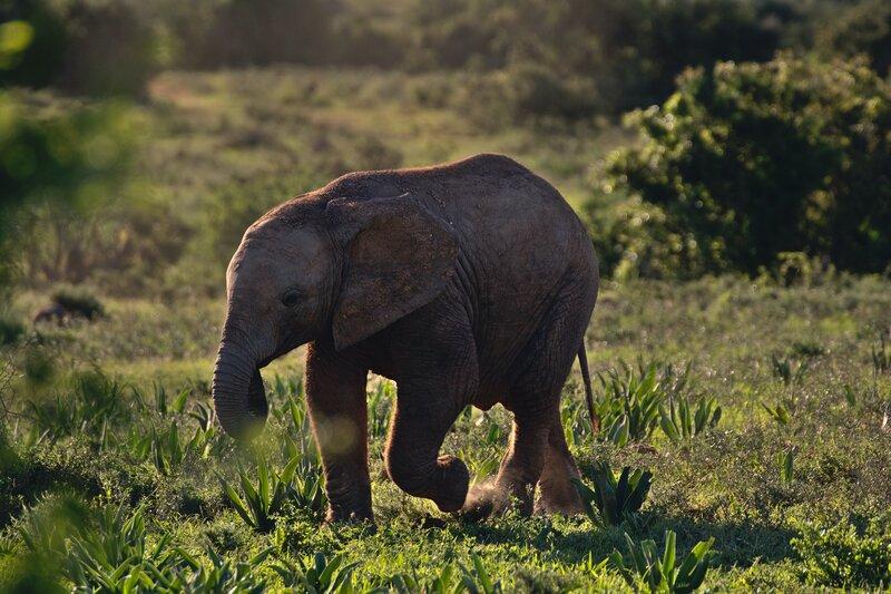 Afkickkliniek Zuid Afrika in een prachtige omgeving